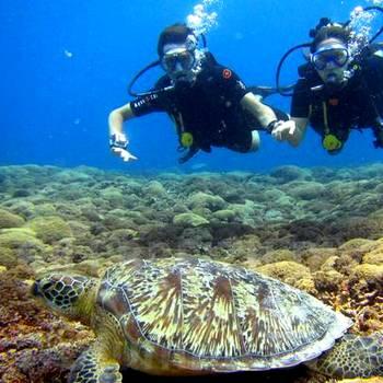 龙目岛-蜜月-水肺潜水