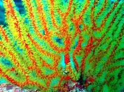 Nice coral in gili - lombok