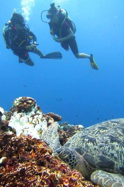 Plongeuses avec une tortue