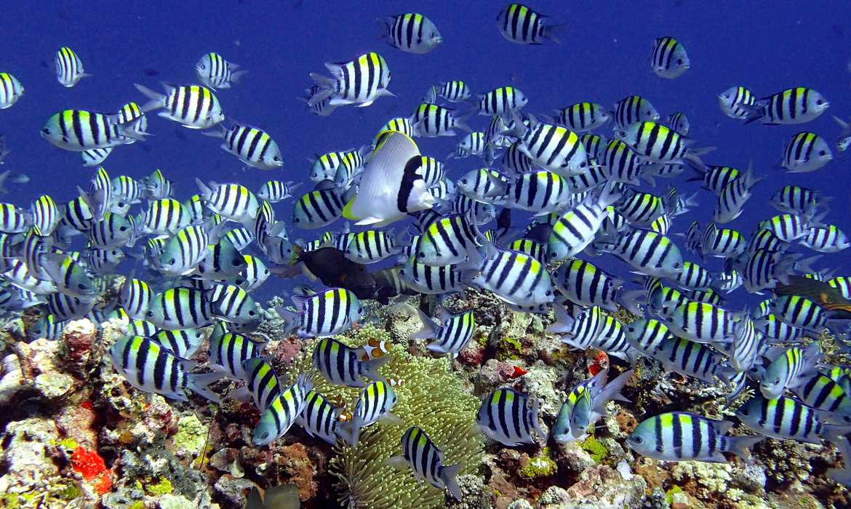 Diving Lombok
