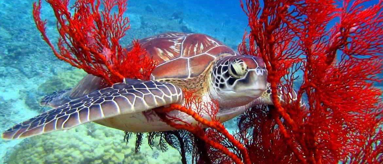 scuba diving gili islands - plongée aux iles Gili