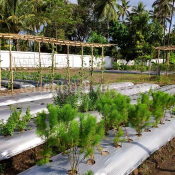 在Anema度假村·烹饪课的菜园