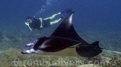 nager avec une raie Manta