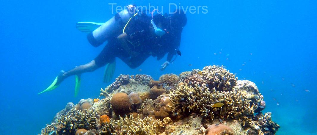 Covid 19 and diving discount
