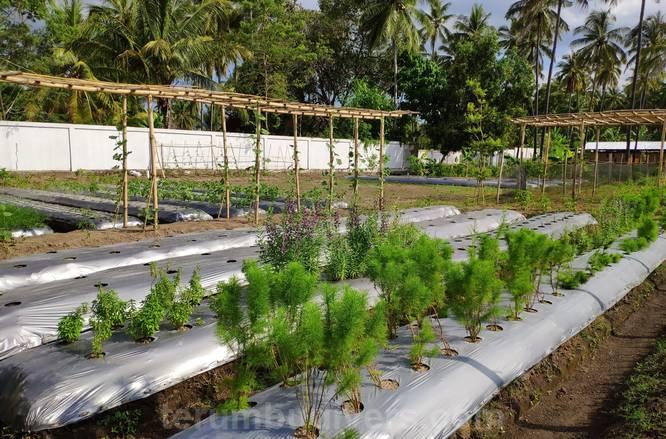 bio garden in hotel Anema